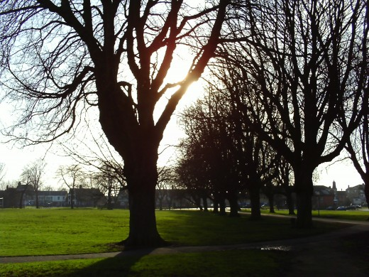 The sun shining through a tree