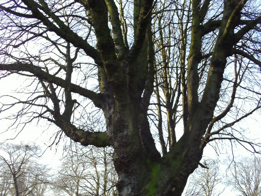 Upwards branches shoot up to the sky.
