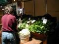 Growing a Market Garden to Make Extra Cash
