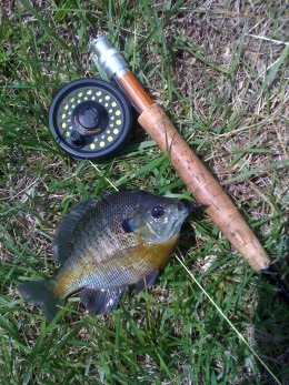 Pond fishing for bluegill a fun way to learn to fly fish for Learn to fly fish