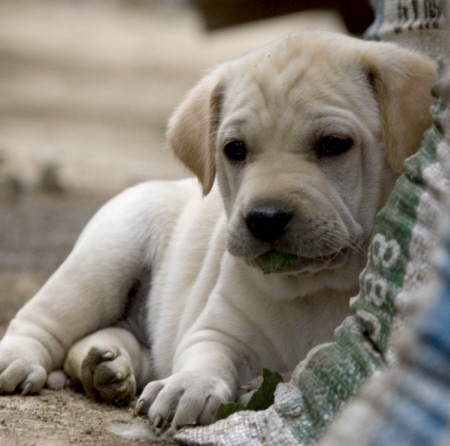 Canine cystitis is very common in puppies.