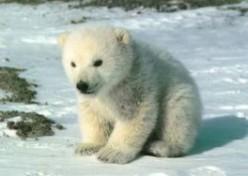 Endangered Tundra Animals