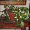 HerbietheHousep profile image