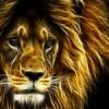 LionElectric profile image