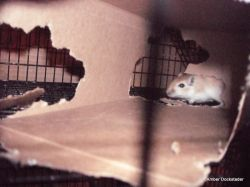 More exploring in the cage.