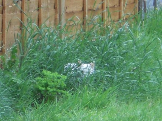 My Garden Helper