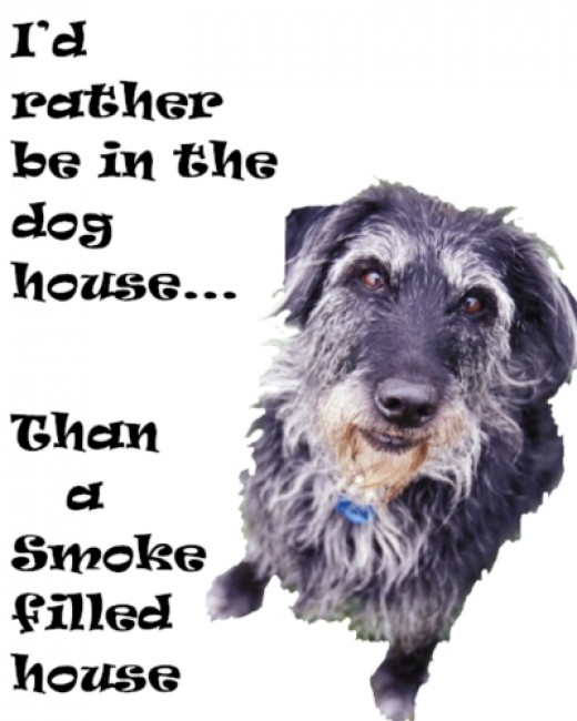 Pets Suffer from Second-hand Smoke Too!