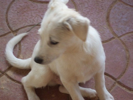 Puppy Mu Needs Some Extra Love