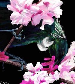 Tui in Cherry Blossoms