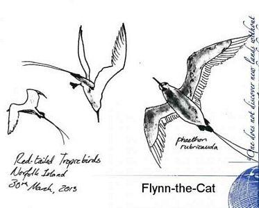 Red-tailed Tropicbird, Norfolk Island