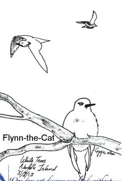 White Terns, Norfolk Island