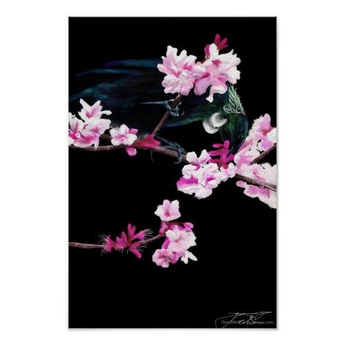 Tui Bird feeding On Cherry Blossoms