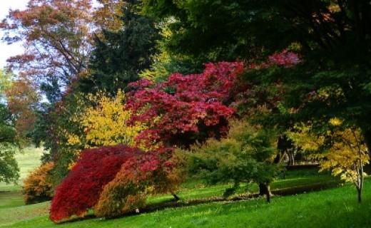 Autumn colours in Dartington Hall gardens, Devon, UK in late light.