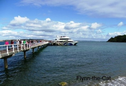 One of the ferries unloading at Tiritiri Matangi