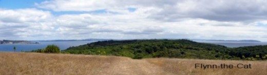The open grassland at the top of Tiritiri Matangi Island