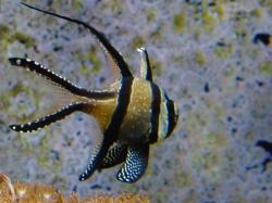 Random tropical fish
