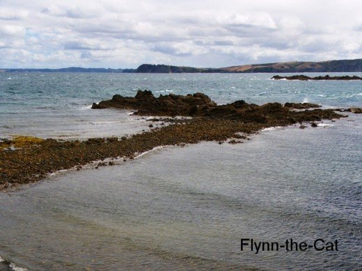 The rocky shore is a good place to spot shorebirds like oystercatchers and shags