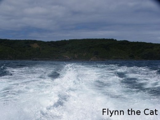 Looking back from the ferry as we left Tiritiri Matangi