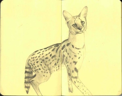 Sketch of a Serval by Flynn the Cat