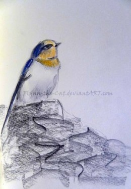 Quick sketch of a swallow