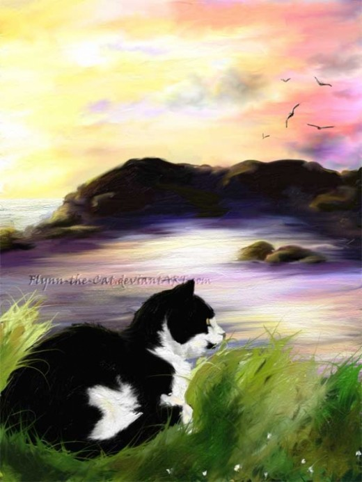 Black and white cat curled up in the grass, looking over the delicate sunrise on the coast of Devon