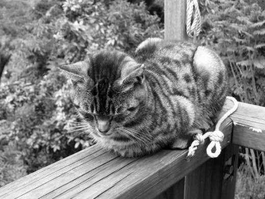 This is the oldest in this section. This is Megan, being sleepy on the balcony of our deck.