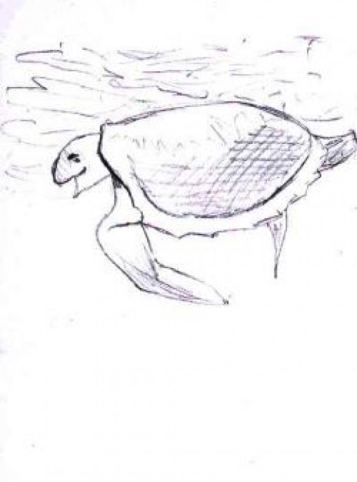 Swimming Turtle by Flynn the Cat