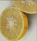 Bitter Orange Supplement Health Benefits
