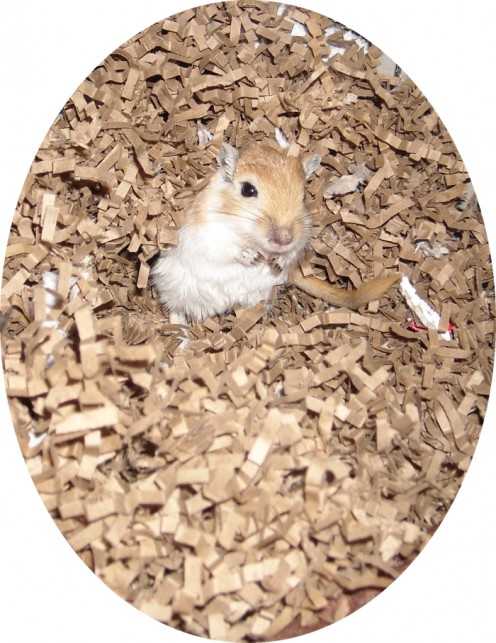 All About Gerbils: Care For Your Gerbil's Diet