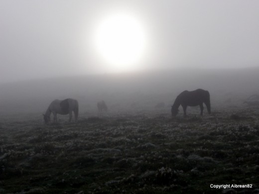 Horses grazing in the morning fog - in the Pyrenees.