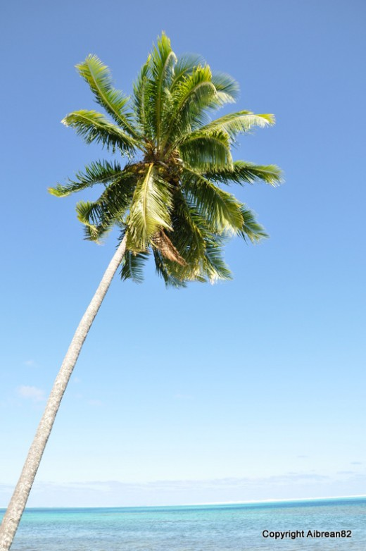 The must-have shot when visiting a tropical paradise. This is from Tahiti.