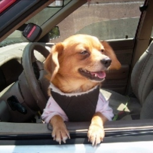 How To Treat Car Anxiety In Dogs
