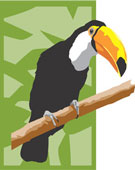 Who can, who can, who can catch a toucan?