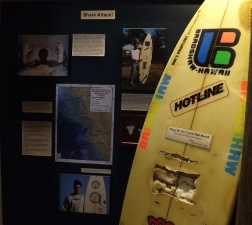 Shark Attack Exhibit at the Surfing Museum