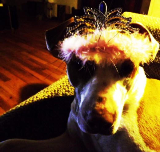 Ruby patiently models a tiara. Good stay!