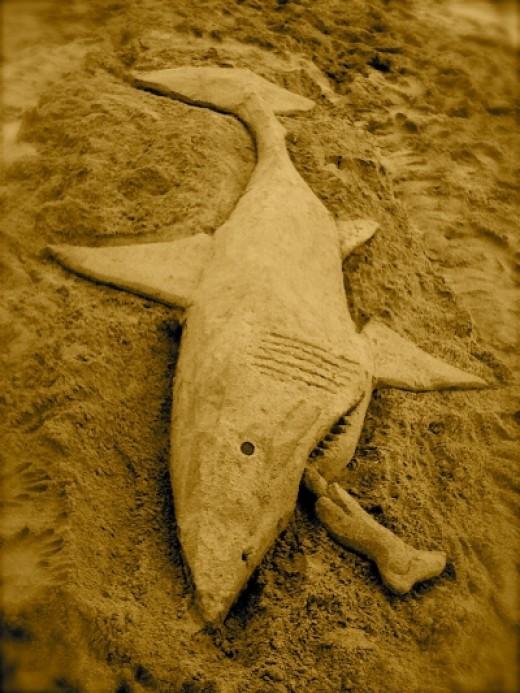 """The """"full"""" shark"""