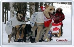 acrylic fridge magnet canada canadian dogs