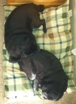 Tia and Bob napping