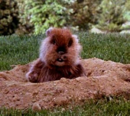 The Gopher (The Gopher) -