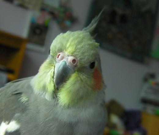 Rocky :)