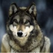 Pliskin124 LM profile image