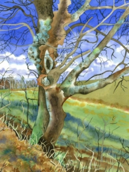 Gnarled Tree - Limited Edition Print