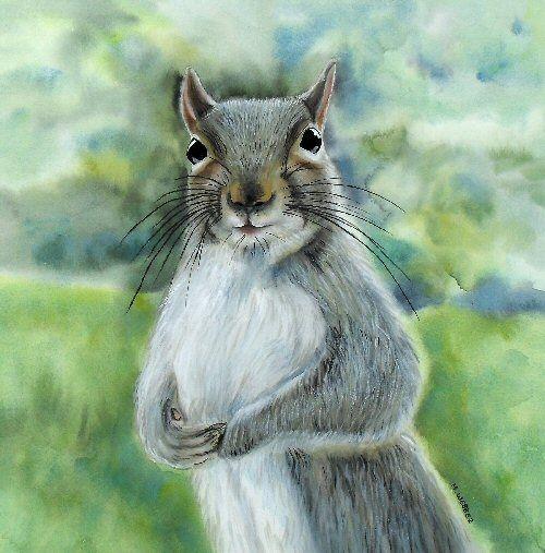 Expectant Squirrel - Original Watercolour