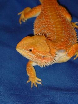 Fire Color Morph
