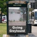 Going Greyhound Without Going Crazy