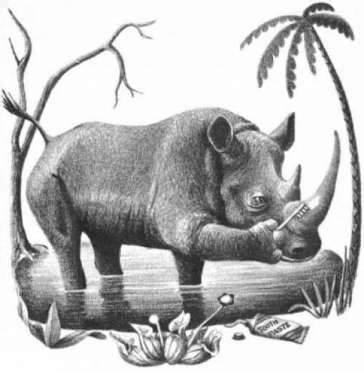 Rhino Brushing His Tusk