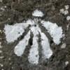 Peregrina LM profile image