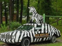painted zebra car