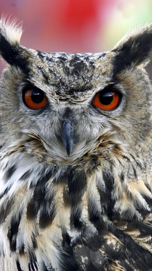 HORNED OWL IPHONE 6 WALLPAPER
