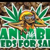 cannabisseedsfo profile image